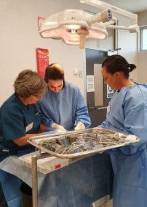 Small Animal Surgery - The Orthopaedic Year Improve International Australia
